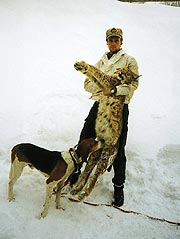 Lodjurshannen på 24,6kilo var påskjuten då Toby släpptes på spåret. Han ställde lodjuret på marken men fick en del styk innan hundföraren Lars Gangås kunde avsluta jakten