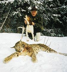 I februari 2000´fällde passkytt Martin Övern en 22,6 kilo tung lodjurshanne för Toby.