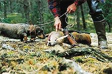 Fyra radjur stals fran jaktlag