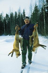 Bo Sundling med två nyfångade rävar.