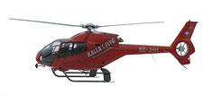 Med hjälp av helikopter söks älgkorna upp för att skjutas med bedövningspil.