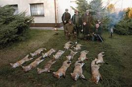 14 rävar och en mård efter tre dagars jakt! På fotot saknas Christian Bertelsen som väntade på Tessa i två och en halv timme vid en enorm halmstack