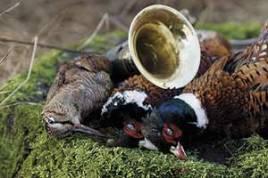 """Efter jakten spelas det """"Morkullans död"""" och """"Fasanens död"""" Jakthornsblåsarna på gården Ny Vrå i norra Jylland hör till världseliten och har många internationella titlar med i bagaget"""