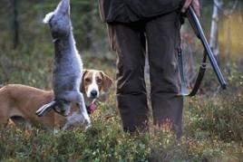 Essy är en typisk drever som driver samtliga fyra tillåtna drevvilt:rådjur, räv, hare och hjort. Enligt husse har hon en viss förkärlek till hare.