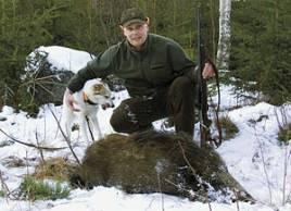 Jakten är numera en väldigt stor och viktig del i Klas Ingessons liv. Här tillsammans med Molly vid det vildsvin som fälldes av Joakim efter ett mycket bra arbete av Molly.