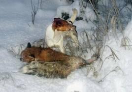 Dio med en av sina många rävar som skjutits efter goda arbeten i rävgryt.