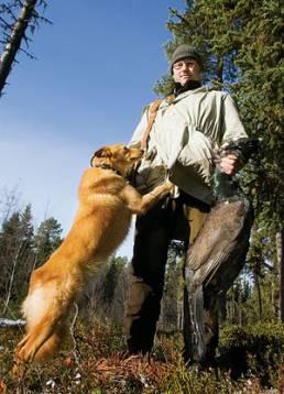 Ett framgångsrikt par, Göran och Chili, som toppade prislistorna förra hösten och även bär ut en och annan tjäder från skogarna kring Storuman.