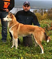 Quinzygårdens Nadja, ägare Daniel Larsson, Norberg segrade i årets SM för älghundar