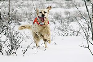 jaktprov för apporterande hund
