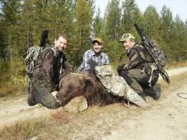 Rasmus Boström, Tommy Östlund och jaktledare Anders Lindkvist vid den fällda björnen.