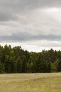 Allt fler betesmarker växer igen runt omkring i Sverige. Foto: Lina Tengström