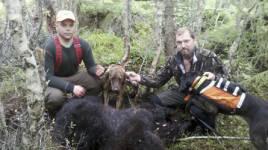 Emil Gustafsson och Rasmus Boström tillsammans med den fällda björnhannen och plottarna Mack och Oryx.