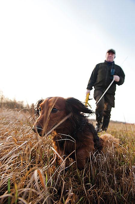 pluto är den första långhåriga taxen sedan 1998 som tagit förstapris på jaktprov.