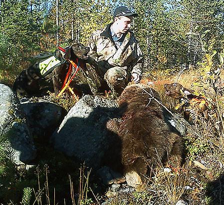 Robert Edelbro, Harads sköt den första björnen efter sin nyligen importerad plotthund Train och Johan Öhman och Jimmy Mårtenssons tik Zoie.