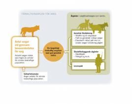 Naturvårdsverkets förvaltningsplan på varg.