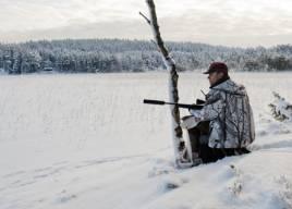 Mycket tyder på att det kan bli förvaltningsjakt på vargar nu i vinter. Foto: Per Jonson