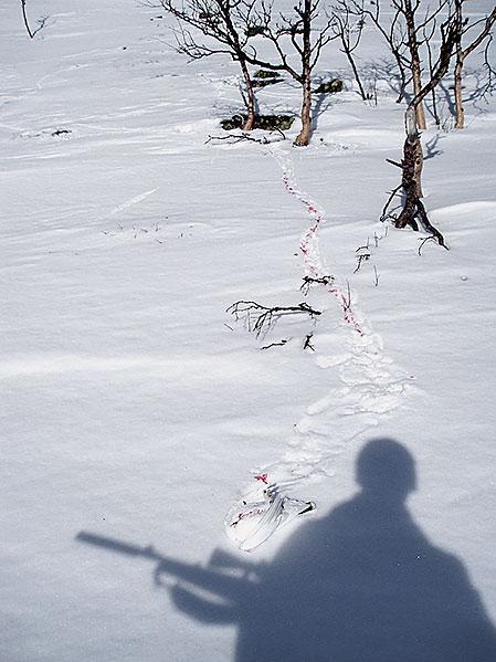 Fjällripjakt en solig marsdag kan ge fina jaktupplevelser, men det finns ingenting som tyder på att jägarna påverkar bestånden.