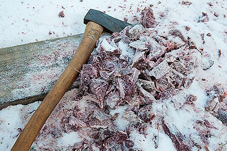 Hugg upp åtelmaterialet i små bitar. Då och då ska räven kunna få loss en munfull, men inte mycket mer.