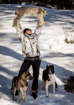 Äkta jaktglädje, Nathalie höjer lodjuret mot himlen och Frisko och Pelton undrar vad som pågår. Foto: Tomas Nybrand.