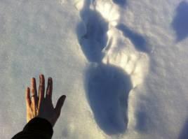 En privatperson tog de här bilderna på det förmodade björnspåret.