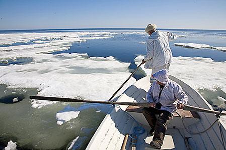 Roland Marklund ror och Kjell Wilund jobbar med båtshaken på väg fram mot en skjuten gråsäl.