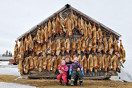 Säsongen 2011/2012 sköt Peter Nilsson 63 åtelrävar. 40 av dem sköts på åteln vid stugan.