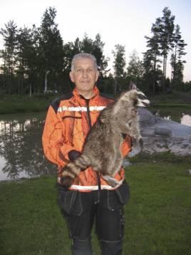 Roger Lundberg med tvättbjörnen som dykt upp i Västerviktrakten. Foto: Privat