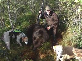 Peder Egnell, Stockholm, med årets andra björn. Helga och Ragnar ståndade björnhonan i tät björksly.