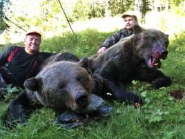 Idag har bröderna Assar och Bengt Torstensson fått uppleva en sanslöst framgångsrik björnjakt, två fina björnhanar sköt de i Ålviken idag.