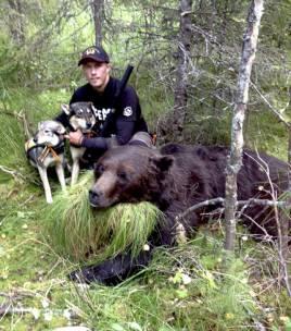 Robin Strömqvist kunde tack vare ett bra hundarbete fälla en fin mörk björnhane utanför Ramsele för någon timme sedan.