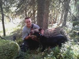 I går fick Lars-Gunnar Falk, skjuta en björn vid jakt i Rymnäs jaktlags marker.
