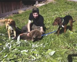 Kristoffer Skålberg, Lesjöfors, sköt sin första björn idag med egna hundar.