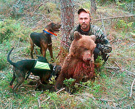 Johan Öhman med björnhanen som han sköt på gångstånd  i samband med ett eftersök i Lumsheden