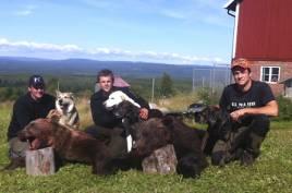 Lyckad björnjakt i Orsa nu på morgonen med två stora hannar. Skyttarna är Jerker Myrén, Niklas Friberg och Jonny Rehn.