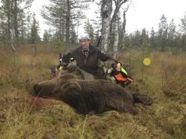 Medlem i Mausjaur sameby sköt björn för Roberts hundar.