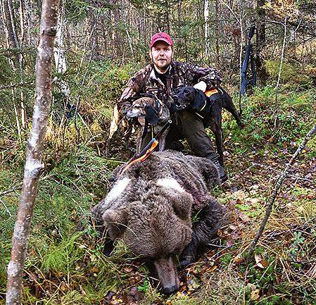 Rasmus Boströms plotthund Oryx och Remi Olsens plotthund Lion såg till att den här björnhonan kunde fällas.