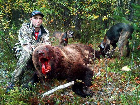 Robert Edelbro, Harads med  plotthundarna Train och Stripe tillsammans med björnhanen som vägde 115 kilo.