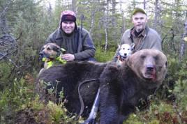 Gårdagens björn sköts utanför Sikfors i Norrbotten. Daniel Birgersson, kunde fälla den stora björnhanen på nära håll. Här tillsammans med kompisen Nicklas Pettersson, Sifors. Samt hundarna Putte och Vilda.
