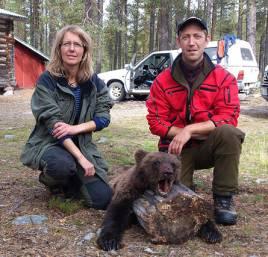 I förra veckan fälldes denna 40 kg björnhane på Löddeåsen, Sonfjället. Ruger och Junior skötte sig igen och Jens Nylund, Finnspång fick avsluta på eftersök.