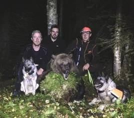 Björnhundspoolen i Västerbotten fällde denna björn utanför Dorotea. Fr v, skytten Martin Ottosson, Anders Mikaelsson, samt Robert Salomonsson och gråhundarna Jack och Zenta.
