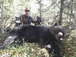 Urak är frisk igen, första släppet efter sjukskrivningen resulterade i en rejäl björnhane för Robert utanför Långsjöby i Storumans kommun. Frisko fick hjälpa till efter att Urak ställt björnen.