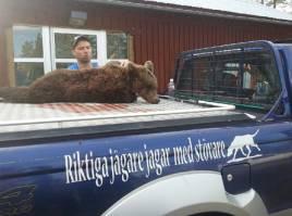 Även den sista björnen på tilldelningen fälldes efter utryckning av Björnhundspoolen. Kuserik Hansson, Särna, fällde en träad fjolårsbjörn för Rasmus Boströms ryska stövare Helga.