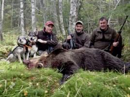 Jägarna bakom första björnen i Liden på mannaminne, fr v Robin Strömqvist med Buniak och Norma, Janne Westerlund och Dick Höglund. Foto: Alexander Fagerlund.