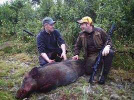 I kvällens program bedriver Thomas Ekberg och andra jägare skyddsjakt på vildsvin.