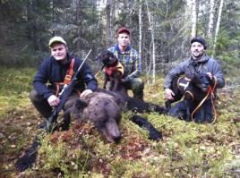 Björnjakten är avslutad i Värmland. Fr v skytten Kristian Olsson, hundföraren Magnus Larsson och Jim Olsson.