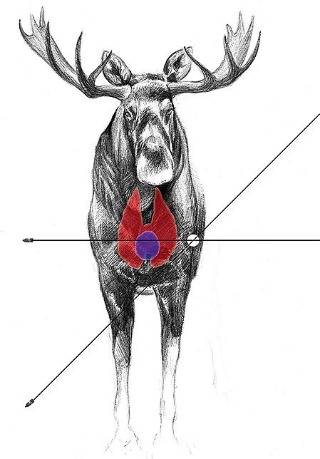 Även om kulbanan inte påverkas nämnvärt av höjdvinkeln när man skjuter på normala skotthåll, måste man ändå tänka till. Det duger inte att sikta på samma punkt som vanligt på viltets sida när man skjuter brant uppifrån. Varför framgår tydligt av skissen.