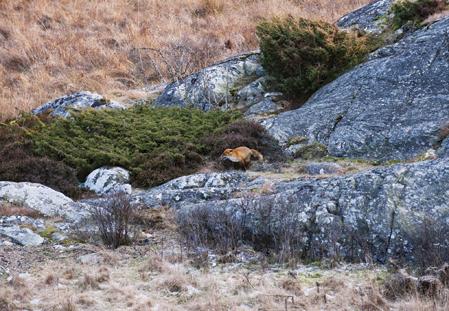 Mickel kommer flygande över klipporna men Magnus står rätt och möter honom med hagel.