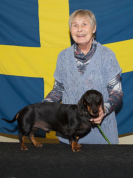Solveig Ekelund och taxen Ludde stog hem årets SM för små drivande hundar.