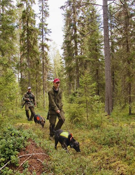 Pagan, envis och spårnoga, Knalla, snabb och modig. En idealisk kombination vid björnjakt.