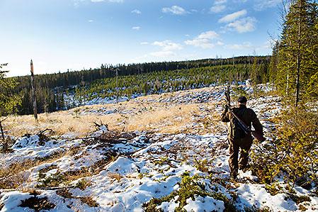 Lian, eller Rex som han kallas till vardags, är injagad i vidsträckta marker i Västerbottens inland.